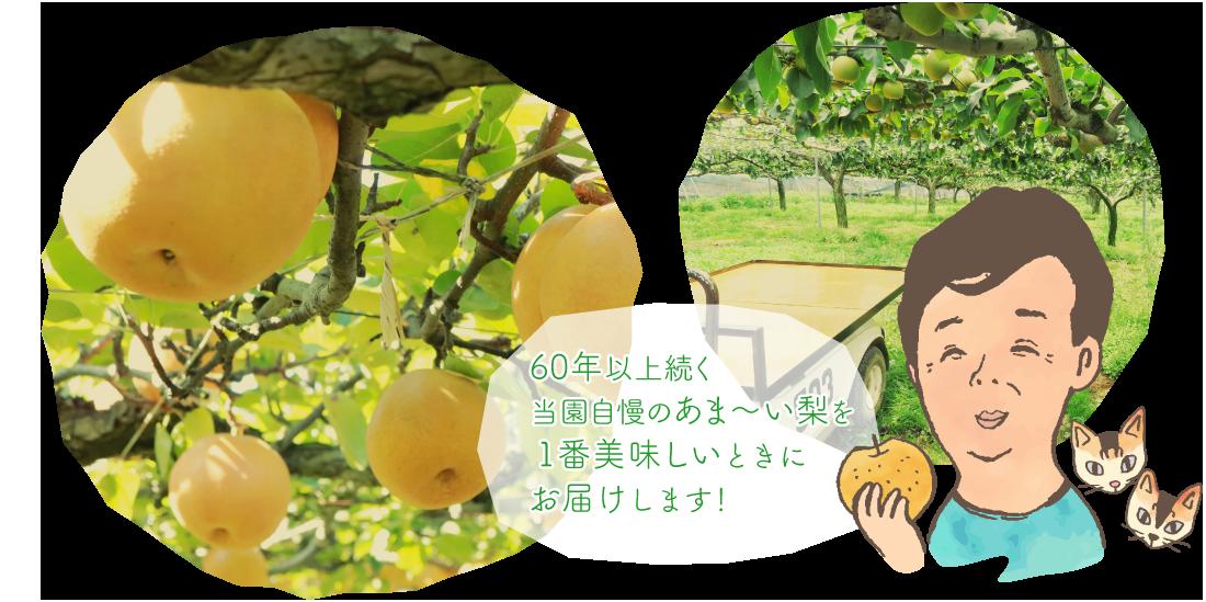 千葉県白井市河原子で梨の栽培・梨の直売・産地直送をしている大塚果樹園です。